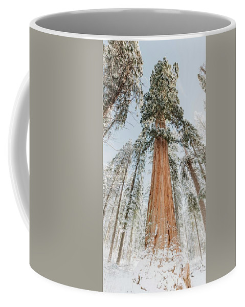 Sequoia Coffee Mug featuring the photograph Snowy Sequoias At Calaveras Big Tree State Park 2 by Steven Jones