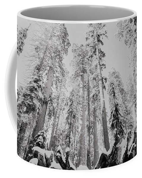 Sequoia Coffee Mug featuring the photograph Snowy Sequoias At Calaveras Big Tree State Park Black And White 3 by Steven Jones