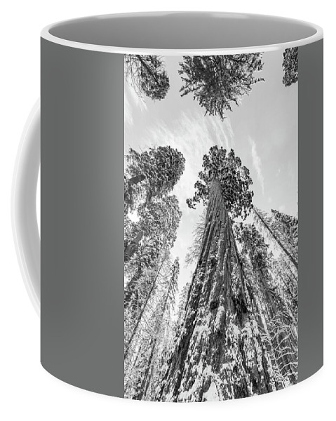 Sequoia Coffee Mug featuring the photograph Snowy Sequoias At Calaveras Big Tree State Park Black And White 6 by Steven Jones