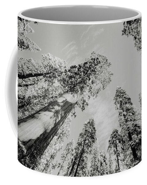 Sequoia Coffee Mug featuring the photograph Snowy Sequoias At Calaveras Big Tree State Park Black And White 7 by Steven Jones