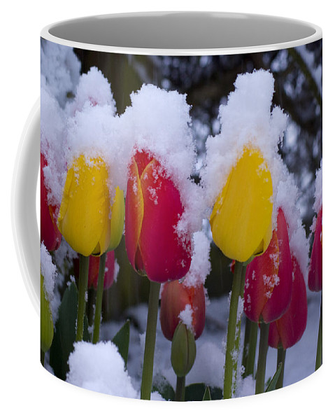 Tulips Coffee Mug featuring the photograph Snowy Tulips by Louise Magno