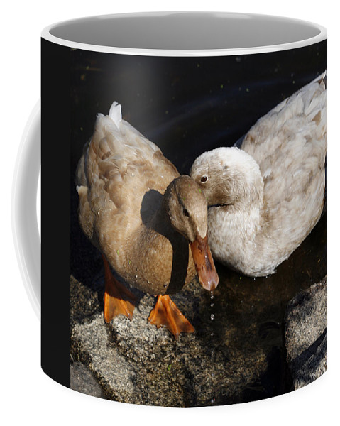 Bird Coffee Mug featuring the photograph Snuggles by Marilyn Hunt