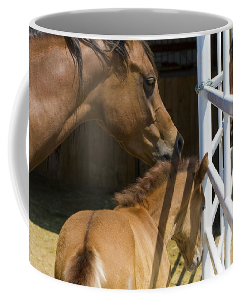 Mother Coffee Mug featuring the photograph Socializing Amongst Horses by Marilyn Hunt