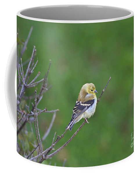 Bird Coffee Mug featuring the photograph Soft And Fluffy by Deborah Benoit