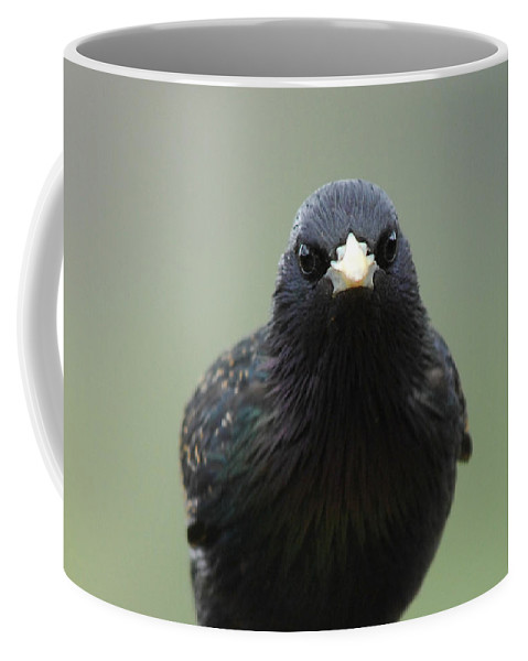 Bird Coffee Mug featuring the photograph Somebody's Watching by Donna Blackhall