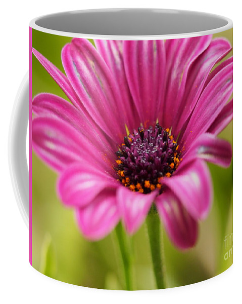 Flowers Coffee Mug featuring the photograph Soprano On A Brilliant Spring Day 3 by Dorothy Lee