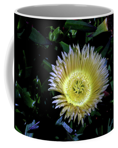 South Coffee Mug featuring the photograph South African Flower 1 by Douglas Barnett