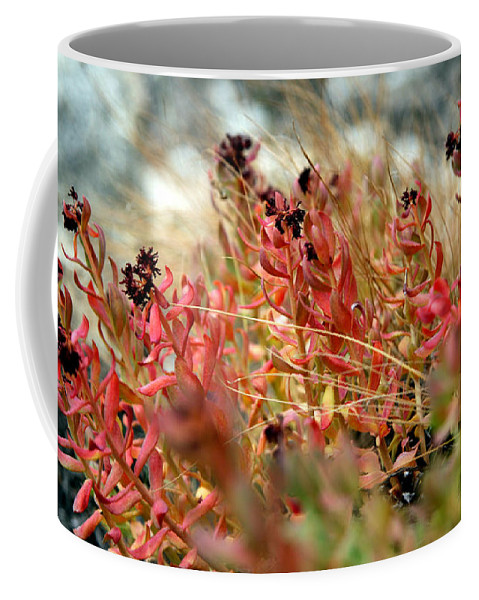 Coffee Mug featuring the photograph South Lake Beauties by Chris Brannen