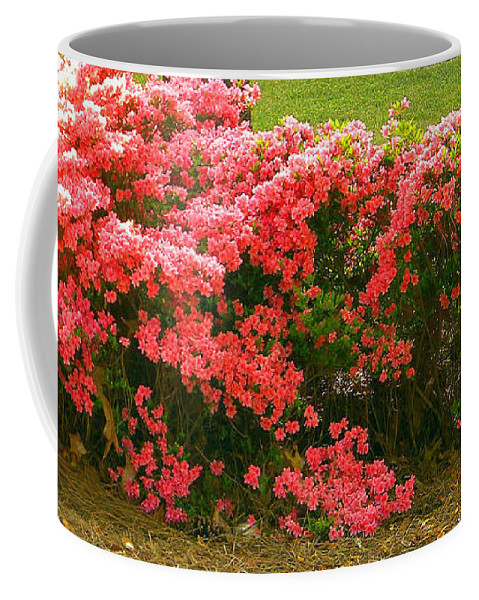 Azaelas Coffee Mug featuring the photograph Southern Beauty by Matthew Seufer