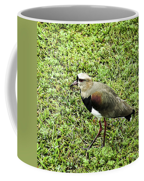 Southern Lapwing Coffee Mug featuring the photograph Southern Lapwing by Norman Johnson