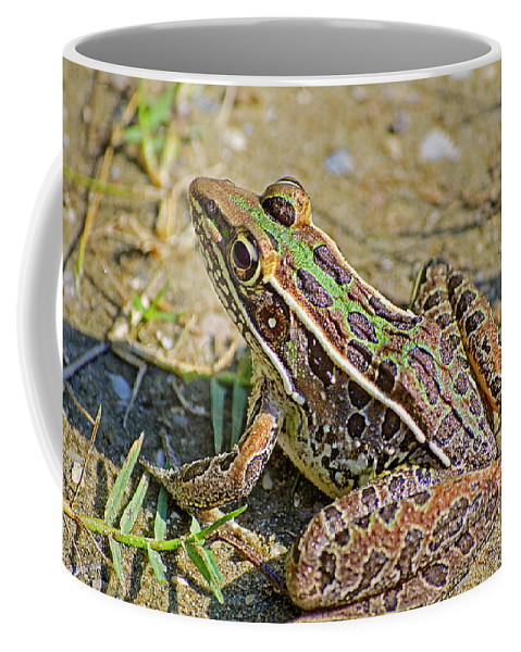 Frog Coffee Mug featuring the photograph Southern Leopard Frog by Kenneth Albin