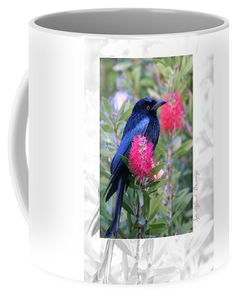 Animals Coffee Mug featuring the photograph Spangled Drongo by Holly Kempe