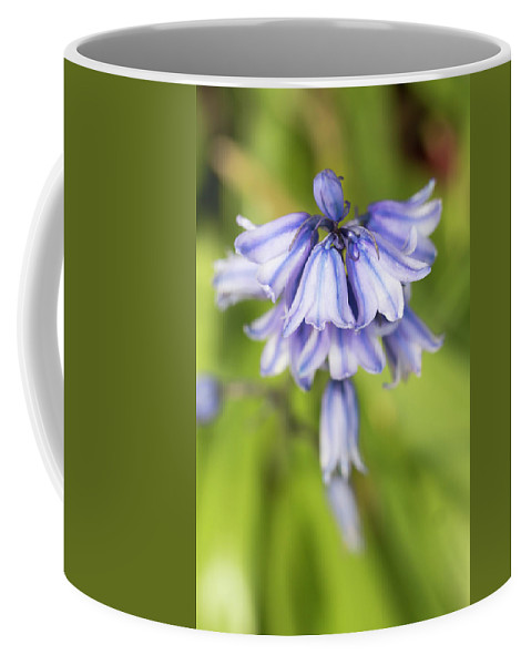 Flower Coffee Mug featuring the photograph Spanish Bluebells 7 by Dawn Cavalieri