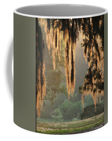 Spanish Moss Coffee Mug featuring the photograph Spanish Moss In The Morning by Robert Meanor