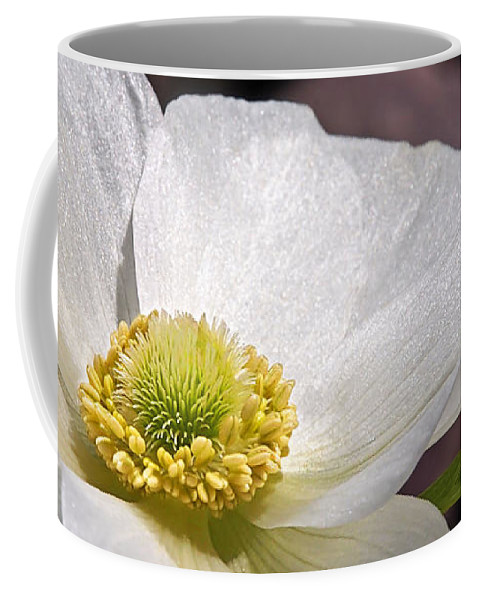 Single White Anemone Coffee Mug featuring the photograph Sparkling White Anemone by Gill Billington