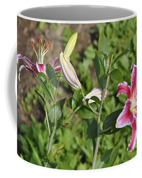 Ruby Lilies Coffee Mug featuring the photograph Speciosum Magnificum by Penny Neimiller