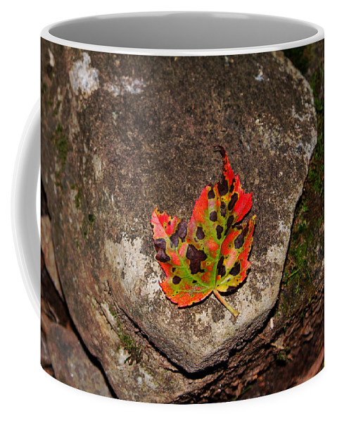 Fall Coffee Mug featuring the photograph Speckled Leaf by Christal Randolph