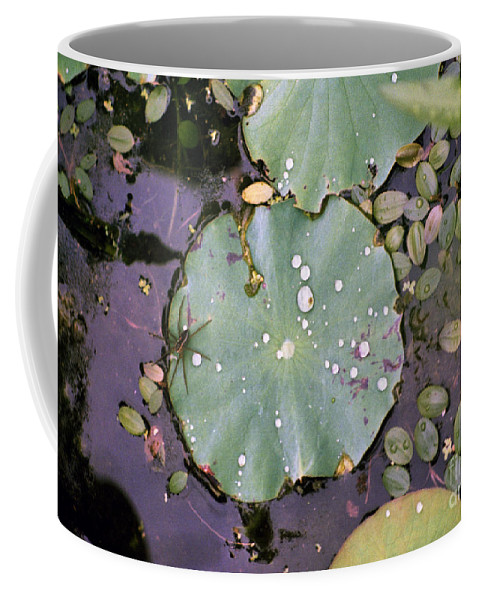 Lillypad Coffee Mug featuring the photograph Spider And Lillypad by Richard Rizzo