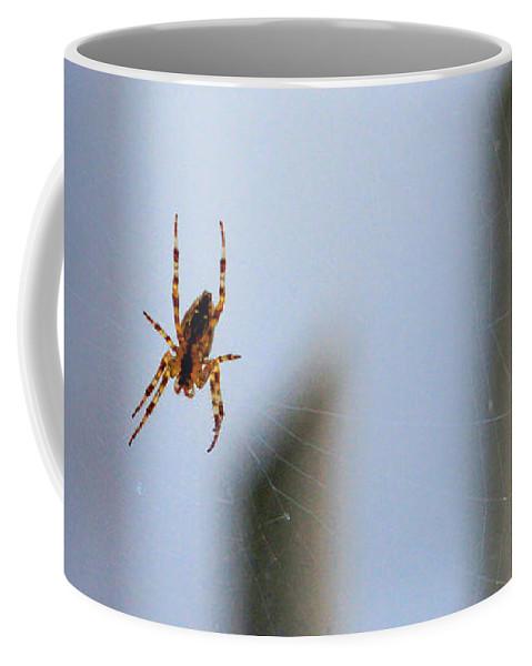 Bonnie Follett Coffee Mug featuring the photograph Spider Hello Panorama by Bonnie Follett
