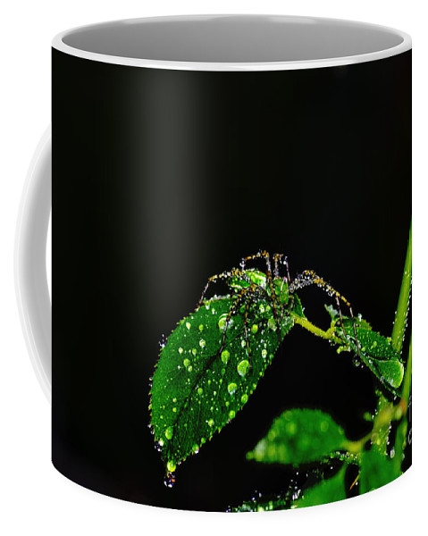 Clay Coffee Mug featuring the photograph Spider In The Shower by Clayton Bruster