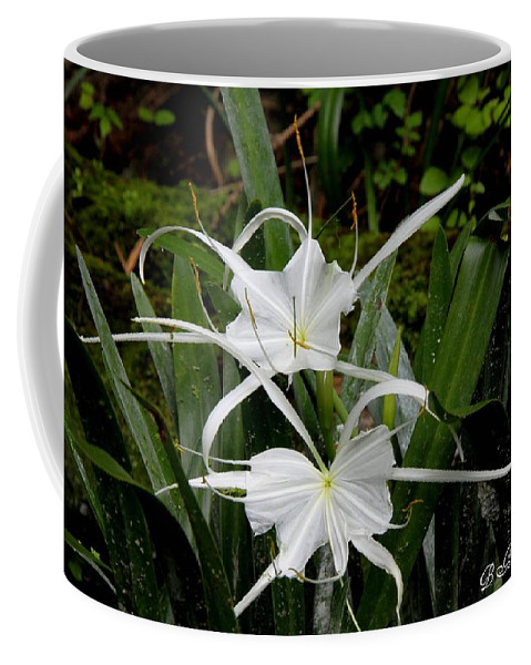 Spider Lily Coffee Mug featuring the photograph Spider Lilies by Barbara Bowen