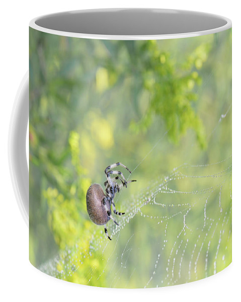 Spider Coffee Mug featuring the photograph Spider On Web by Barbara Treaster