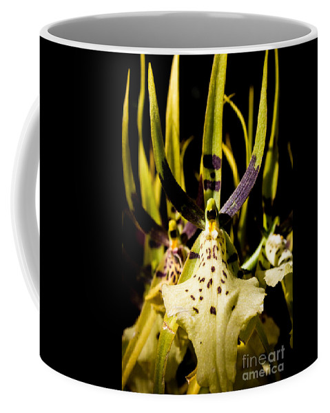 Spider Coffee Mug featuring the photograph Spider Orchid by Samantha Glaze