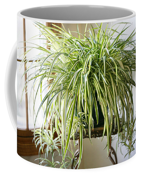 Spider Plant Coffee Mug featuring the photograph Spider Plant by Marilyn Hunt