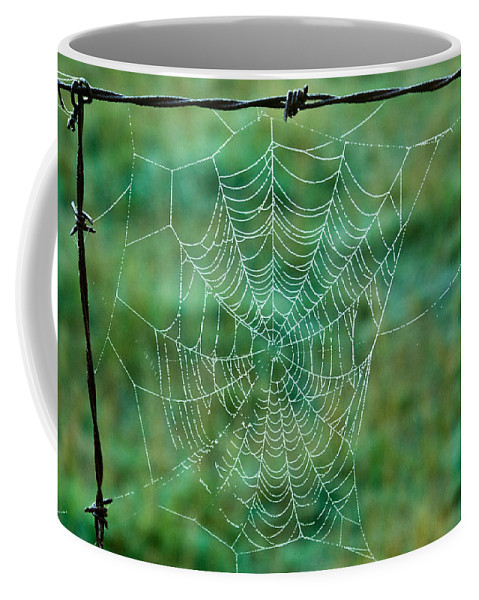 Spider Coffee Mug featuring the photograph Spider Web In The Springtime by Douglas Barnett