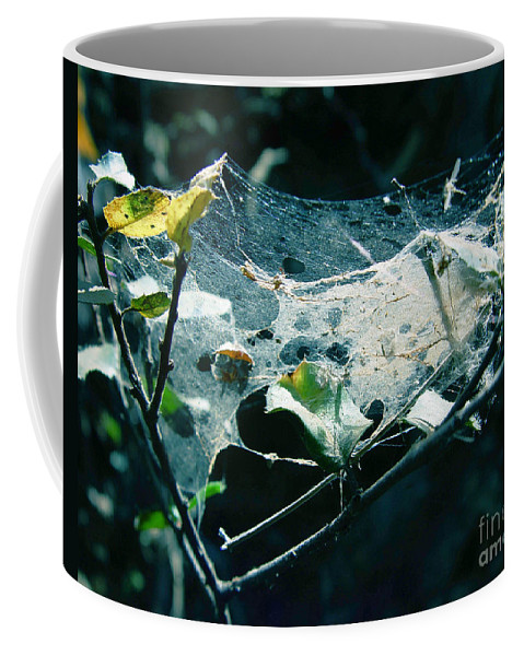 Spider Coffee Mug featuring the photograph Spider Web by Peter Piatt