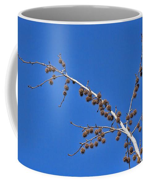 Tree Coffee Mug featuring the photograph Spike Ball Tree by Kelley King