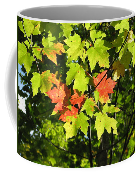 Fall Coffee Mug featuring the photograph Splattered Paint by Kelly Mezzapelle