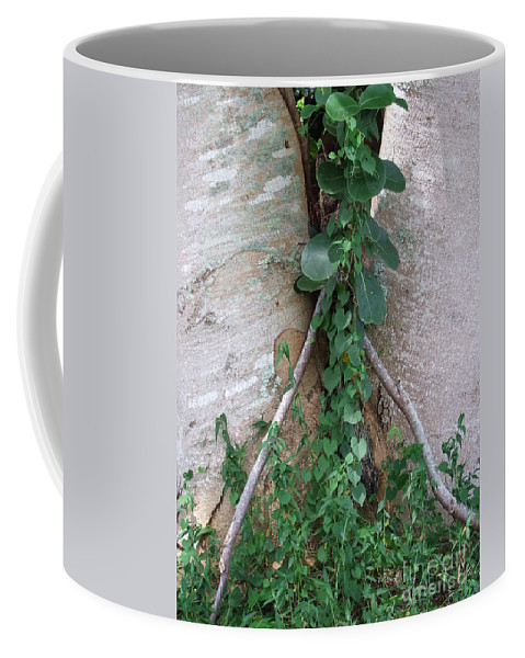 Green Coffee Mug featuring the photograph Split Tree by Mary Deal