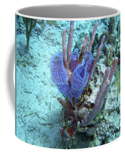 Underwater Coffee Mug featuring the photograph Sponge Garden by Paul Westcott