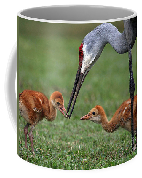 Spring Babies Coffee Mug featuring the photograph Spring Babies by Davids Digits