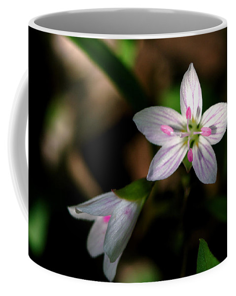 Spring Coffee Mug featuring the photograph Spring Beauty by Jack R Perry