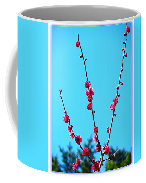 Posters Coffee Mug featuring the photograph Spring Blooms by Sonali Gangane