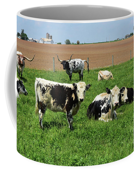 Cow Coffee Mug featuring the photograph Spring Day With Cows On An Amish Cattle Farm by DejaVu Designs