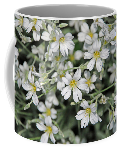 Spring Coffee Mug featuring the photograph Spring Flowers by Carol Eliassen