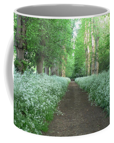 Gardens Coffee Mug featuring the photograph Spring In The Avenue by Lynne Iddon