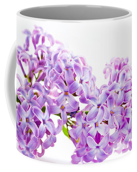 Lilac Coffee Mug featuring the photograph Spring Lilac Flowers Blooming Isolated On White by Michal Bednarek
