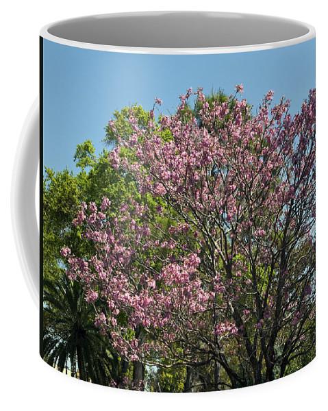 Magnolia Coffee Mug featuring the photograph Spring Magnolia by Allan Hughes
