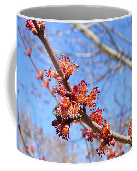 Maple Tree Spring Blossoms Coffee Mug featuring the photograph Spring Maple Blossoms by Stephanie Forrer-Harbridge