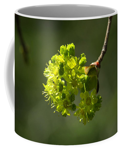 Maple Tree Coffee Mug featuring the photograph Spring Maple by Ronald Raymond
