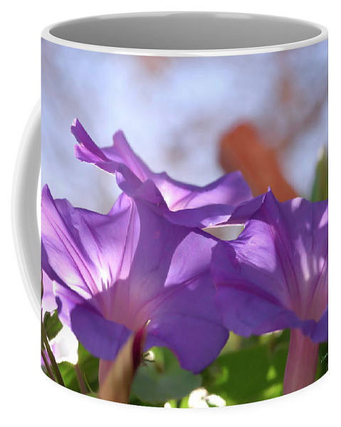 Morning Glory Coffee Mug featuring the photograph Spring Morning by Donna Blackhall