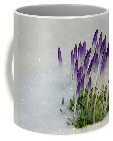 Spring Coffee Mug featuring the photograph Spring Snow by Lisa Kane