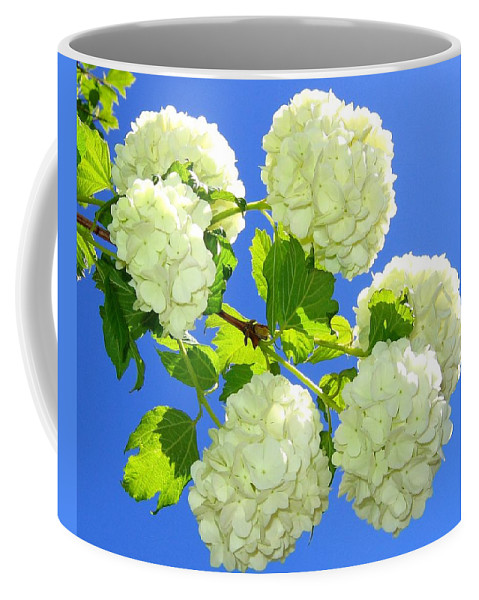 Snowballs Coffee Mug featuring the photograph Spring Snowballs by Will Borden