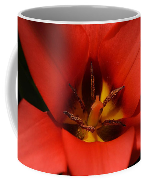 Tulip Coffee Mug featuring the photograph Spring Star by Felicia Tica