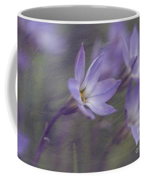Ipheion Uniflorum Coffee Mug featuring the photograph Spring Starflower by Eva Lechner