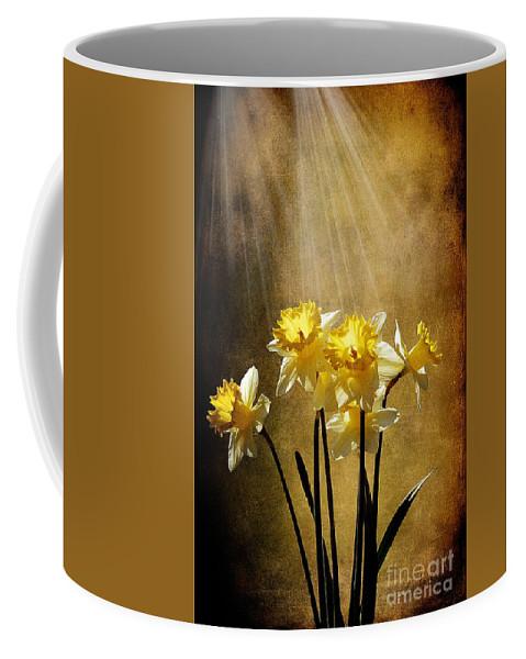 Daffodils Coffee Mug featuring the photograph Spring Sun by Lois Bryan